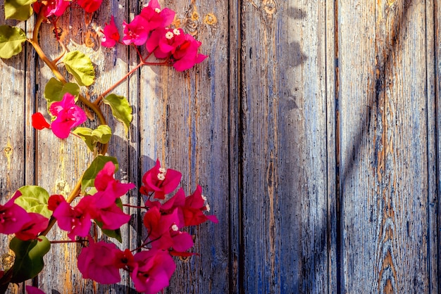 Old wooden door with bougainvillea Free Photo
