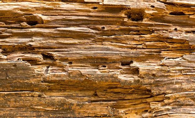古い木の質感、茶色 Premium写真
