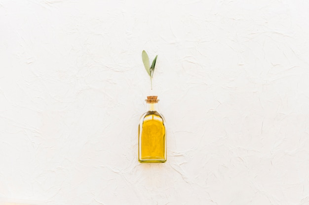 Olive twig over the closed oil bottle over the white background Free Photo