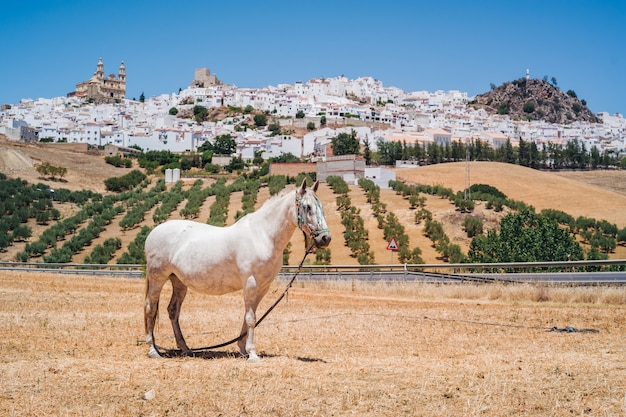 Olvera in andalusia Premium Photo