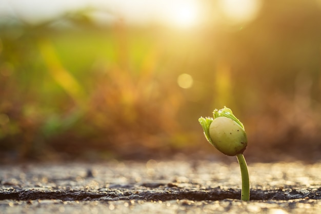 One green young seed of tree growing from cracks of asphalt road. environment concept Premium Photo