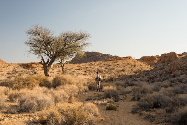 One person hiking in the namib desert Premium Photo