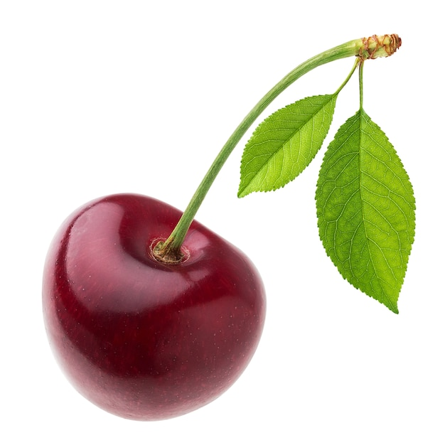 One red cherry with leaf isolated Premium Photo