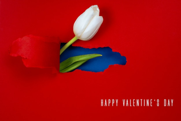 One white tulip is visible from a hole in the red paper. inside, a blue color and a green leaf are shown Premium Photo