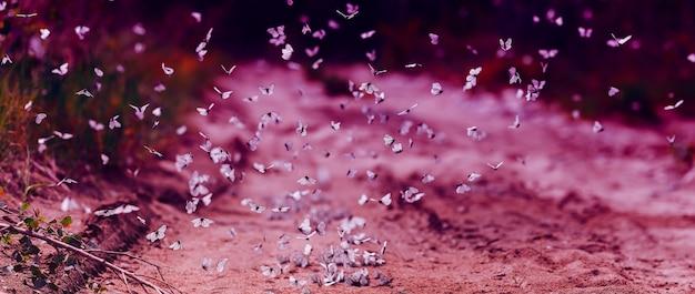 白いキャベツ蝶の多くは、日当たりの良い夏の日、モダンなonedバイオレット写真で飛ぶ Premium写真