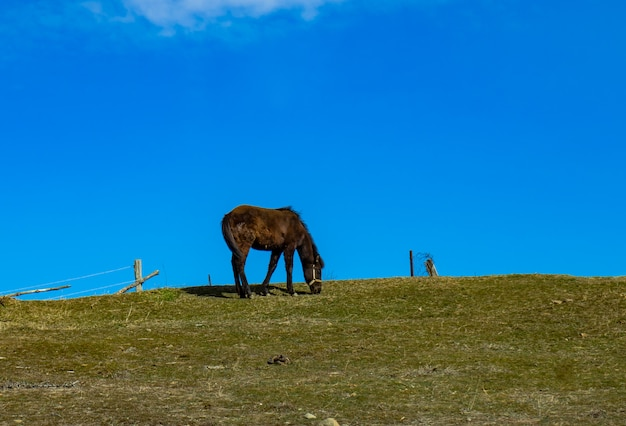 Only horse walking on a hill Premium Photo