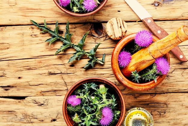 Onopordum.herbalism.thistle Premium写真