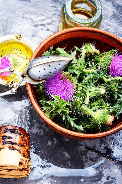 Onopordum.herbalism.thistle Premium Photo