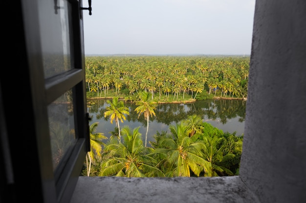 Open grey window with top view of bright palm grove Premium Photo