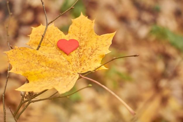 Open pure heart symbol, copy space. Premium Photo