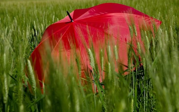 緑の芝生で赤い傘を開く 無料写真