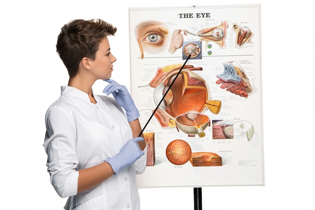 Optician or oculist woman telling about structure of eye Free Photo
