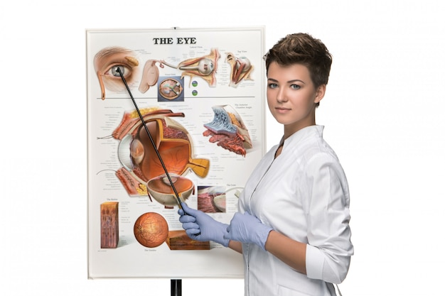 Optician or oculist woman telling about structure of the eye Free Photo