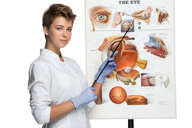 Optician or oculist woman tells about structure of the eye Free Photo