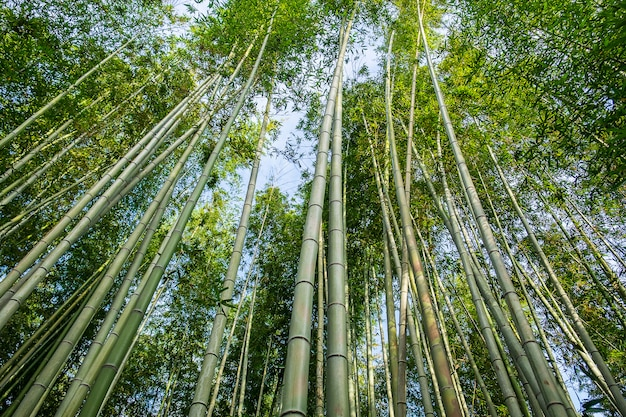 嵐山竹林またはor野竹林は嵐山の竹の天然林であり、京都の観光名所として人気があります。日本 Premium写真