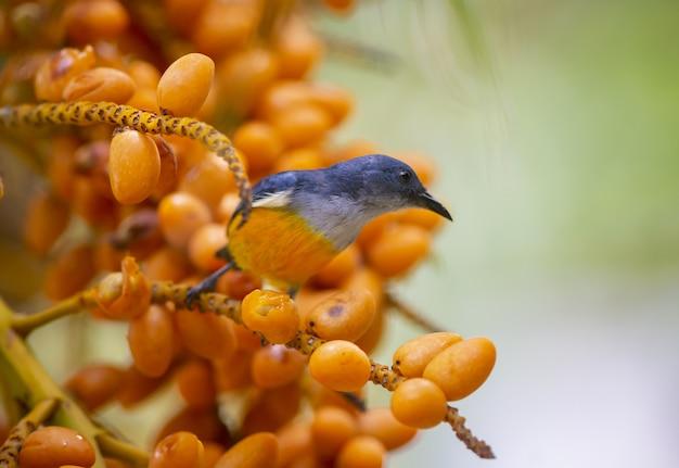 Оранжевый пузатый цветок на ветке дерева Бесплатные Фотографии