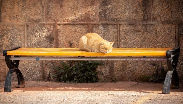 Orange cat sleeping on outdoor yellow wooden chair Premium Photo