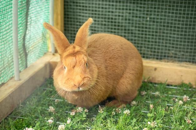 緑の芝生と檻の中のオレンジ色の国内のウサギ 無料写真
