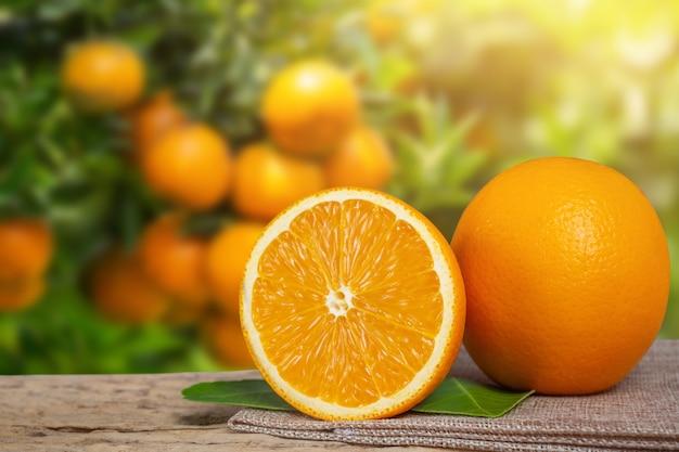 정원에서 오렌지. 무료 사진