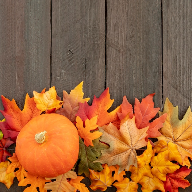 Orange pumpkin on colourful leaves with copy space Free Photo