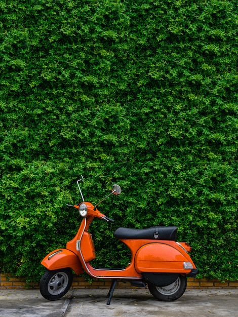 Orange retro scooter parked on street side with green leaves wall. Premium Photo
