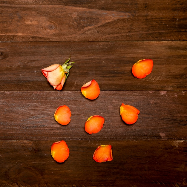 Orange rose and petals on wooden surface Free Photo
