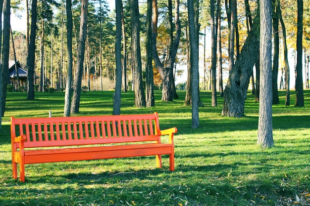 Orange wooden bench in park on a sunny day Premium Photo