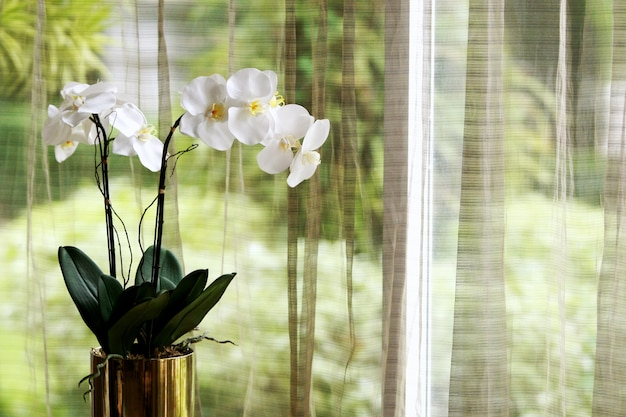 Orchid decoration and curtain background Premium Photo