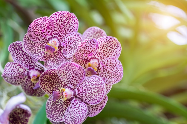 Orchid flower in garden at winter or spring day. Premium Photo