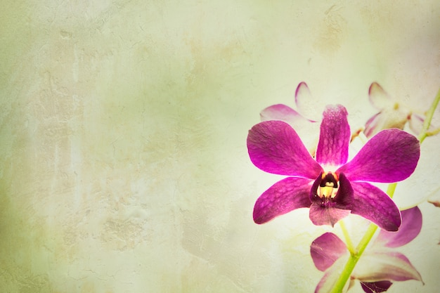 Orchid flower with vintage background. Premium Photo