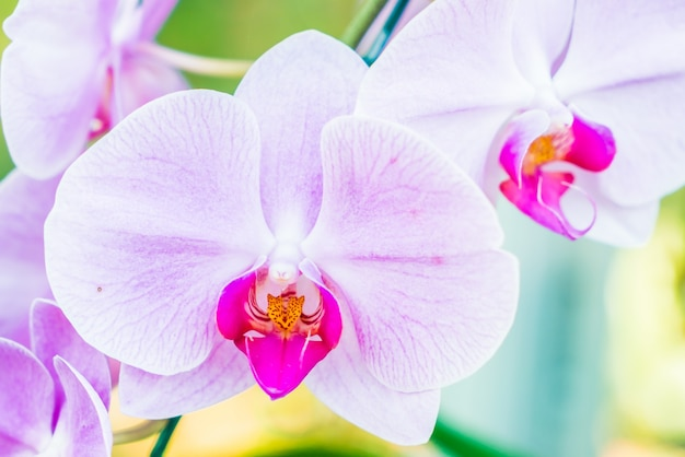 orchid flower photo  free download, Natural flower