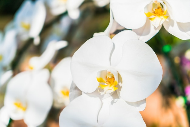 Orchid flower Free Photo