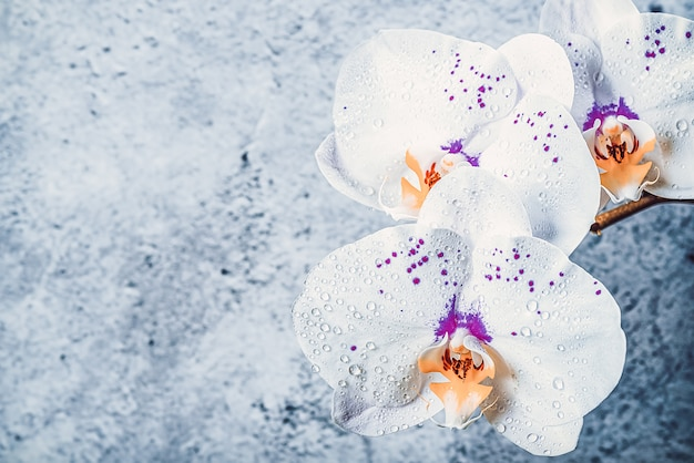 Цветы орхидеи на ветке у штукатурки стены, макет Premium Фотографии