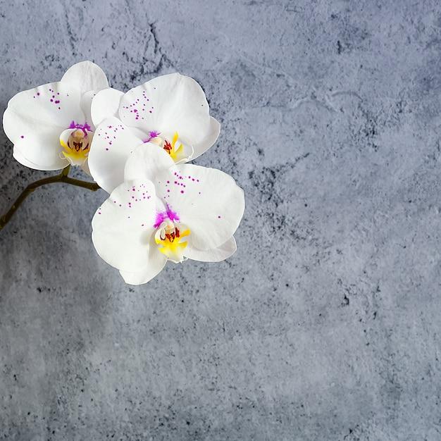 Цветы орхидеи на ветке у штукатурки стены Premium Фотографии