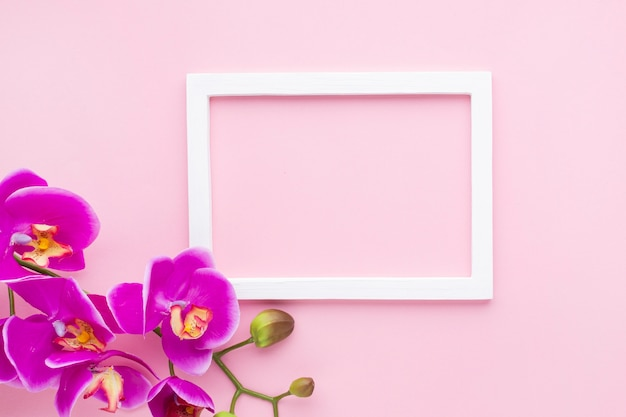 Orchid flowers on a pink copy space background Free Photo