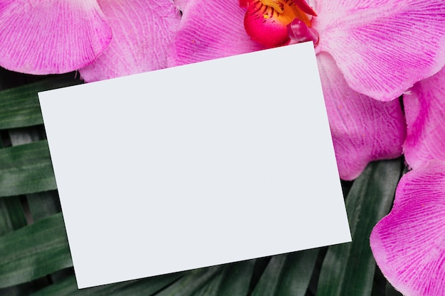 Orchid and tropical leaves with copy space Free Photo