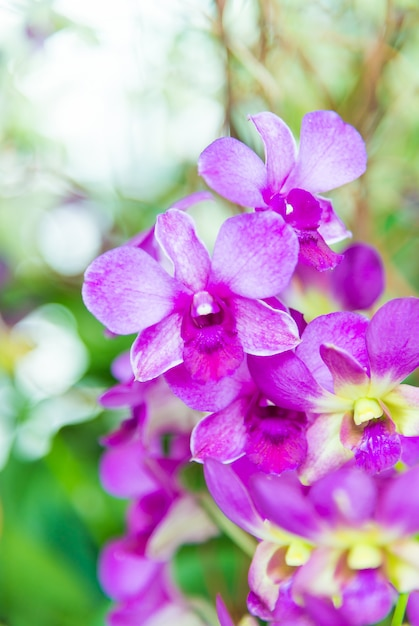 Orchid Free Photo