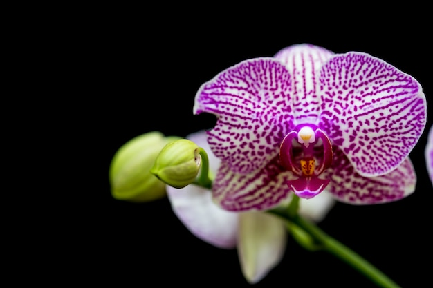 Orchids in the garden have a black background. Premium Photo