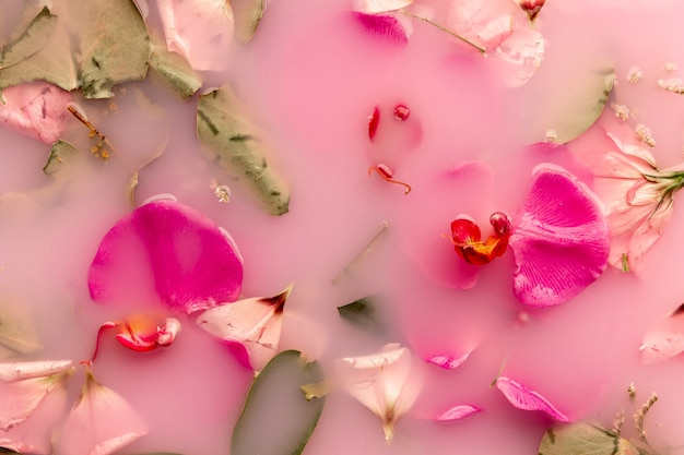 Orchids and roses in pink colored water Free Photo