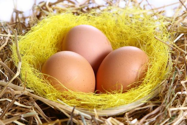 Organic eggs in yellow grass Free Photo