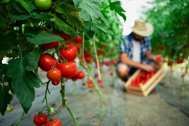 Azienda agricola biologica Foto Gratuite
