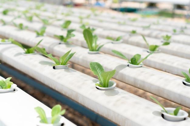 有機養液野菜栽培農場。農業と食品の概念。 Premium写真