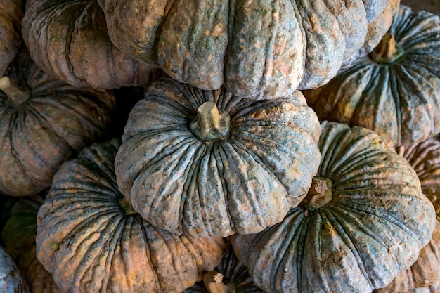 Organic pumpkins Premium Photo