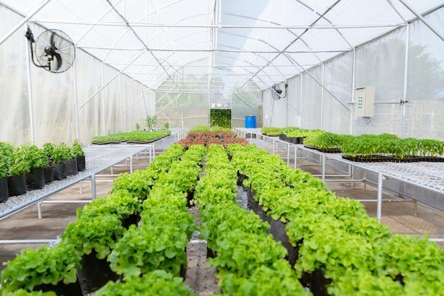 Organic vegetable to plant on the farm to nursery environmental Premium Photo