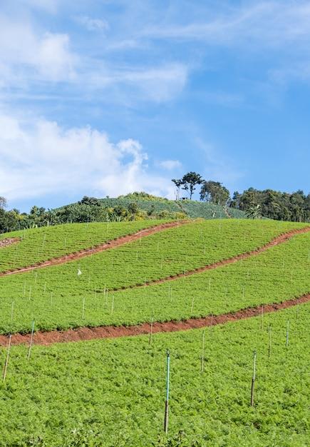 Органический овощной участок с системой орошения. Premium Фотографии