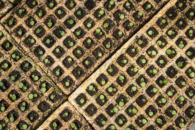Organic vegetable seedlings, plant seedlings growing on fertile soil with fertilizer Premium Photo