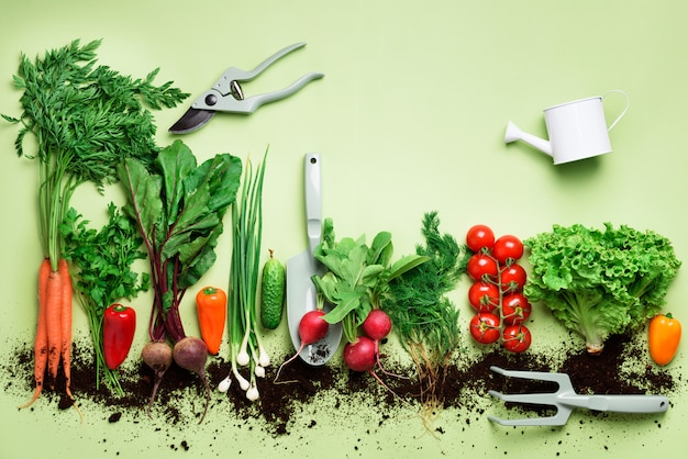 Organic vegetables and garden tools. top view. carrot, beet, pepper, radish, dill, parsley, tomato, lettuce. Premium Photo