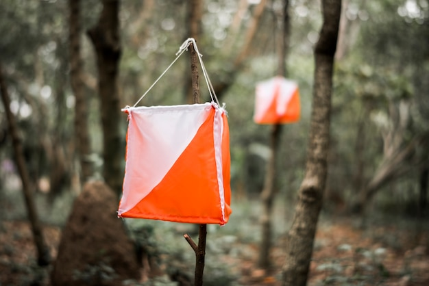 Orienteering box outdoor in a forest Free Photo