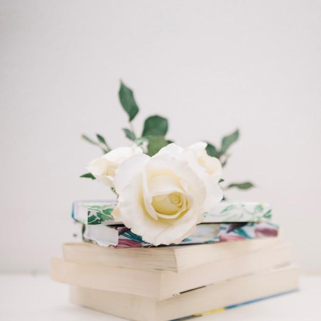 Ose on pile of books Free Photo