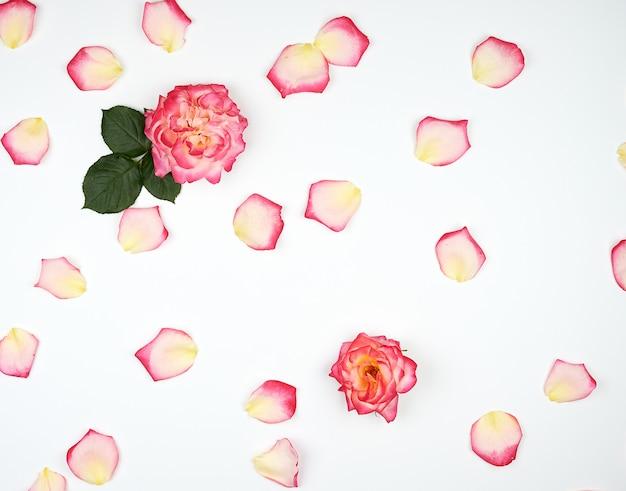 散らばった混oticとしたピンクの花びら Premium写真